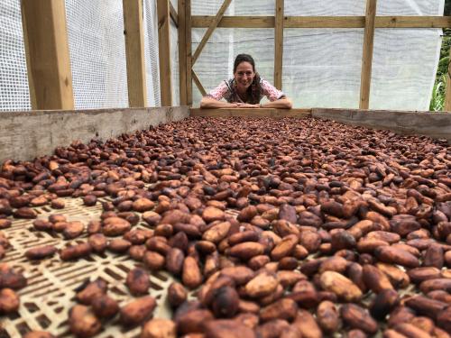 A fermentálás jelentősége a csokoládékészítésben