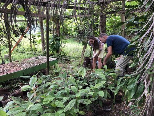 Kakaótermesztés – a magtól a termésig vezető út