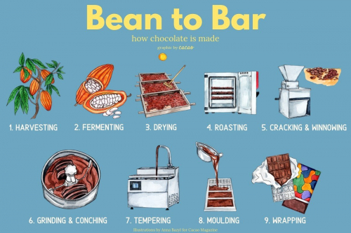Copy-of-Copy-of-cacao-3 (1).jpg